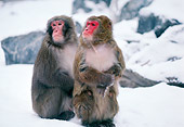 PRM 06 RK0027 01
