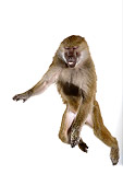 PRM 06 RK0041 01