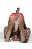 PRM 06 RK0042 01