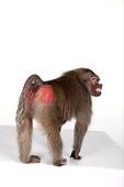 PRM 06 RK0044 01