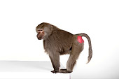 PRM 06 RK0046 01
