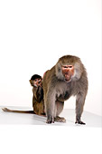 PRM 06 RK0047 01