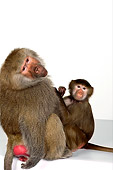 PRM 06 RK0049 01