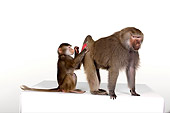 PRM 06 RK0051 01
