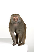 PRM 06 RK0053 01