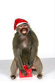 PRM 06 RK0058 01