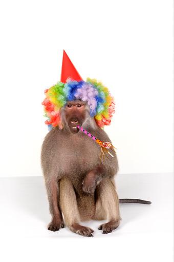 animals wearing birthday hats - photo #33