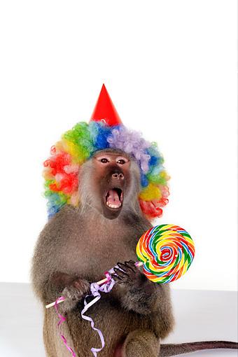animals wearing birthday hats - photo #23