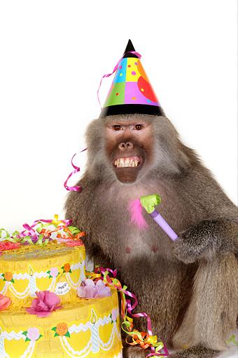 animals wearing birthday hats - photo #7
