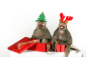 PRM 06 RK0077 01