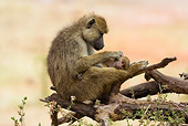 PRM 06 RW0001 01
