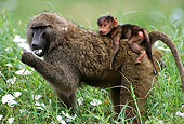 PRM 06 TL0001 01