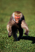 PRM 06 TL0003 01
