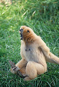PRM 10 GL0007 01