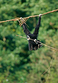 PRM 10 GL0009 01