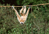 PRM 10 GL0020 01