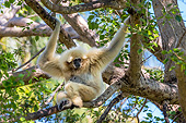 PRM 10 KH0001 01