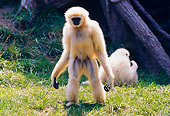 PRM 10 RK0014 01