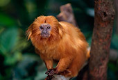 PRM 10 TL0001 01