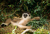 PRM 10 TL0004 01