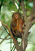 PRM 10 TL0006 01