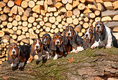 PUP 01 AB0001 01