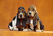 PUP 01 CB0002 01