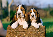 PUP 01 CB0004 01