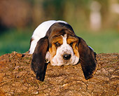 PUP 01 CB0006 01