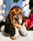 PUP 01 CB0009 01