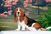 PUP 01 CE0027 01