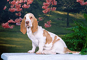 PUP 01 CE0028 01