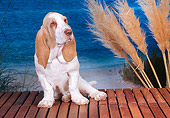 PUP 01 CE0029 01