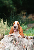 PUP 01 CE0065 01