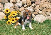 PUP 01 FA0001 01