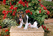 PUP 01 FA0003 01