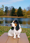 PUP 01 FA0005 01