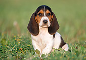 PUP 01 GR0032 01