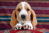PUP 01 GR0037 01