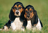 PUP 01 GR0039 01