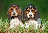 PUP 01 GR0040 01