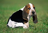 PUP 01 GR0044 01