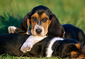 PUP 01 GR0046 01
