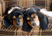 PUP 01 GR0047 01