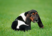 PUP 01 GR0048 01
