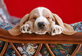 PUP 01 GR0050 01