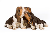 PUP 01 JE0005 01