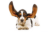 PUP 01 JE0013 01