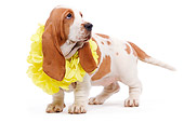 PUP 01 JE0016 01