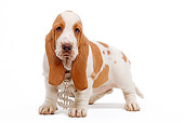 PUP 01 JE0017 01